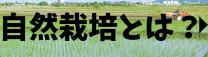 自然栽培農法との出会い
