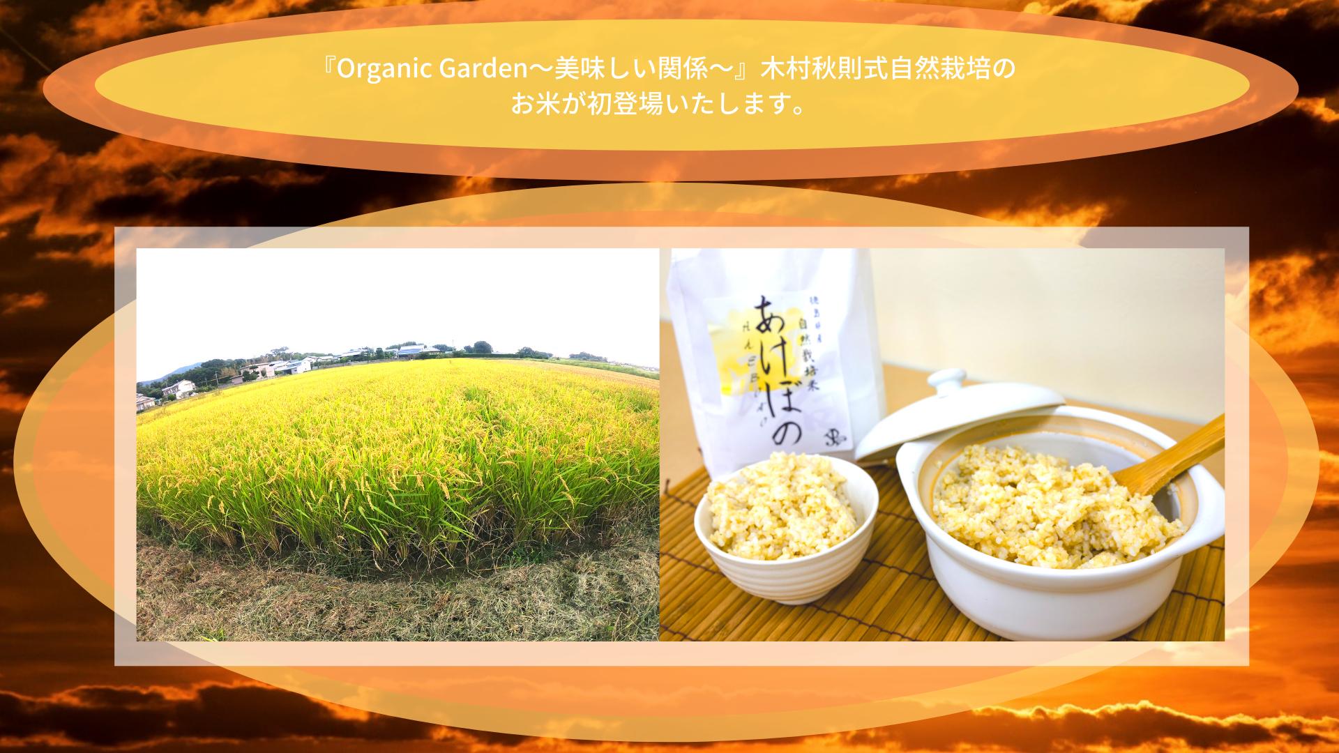 木村秋則式自然栽培にて育ったお米のご紹介